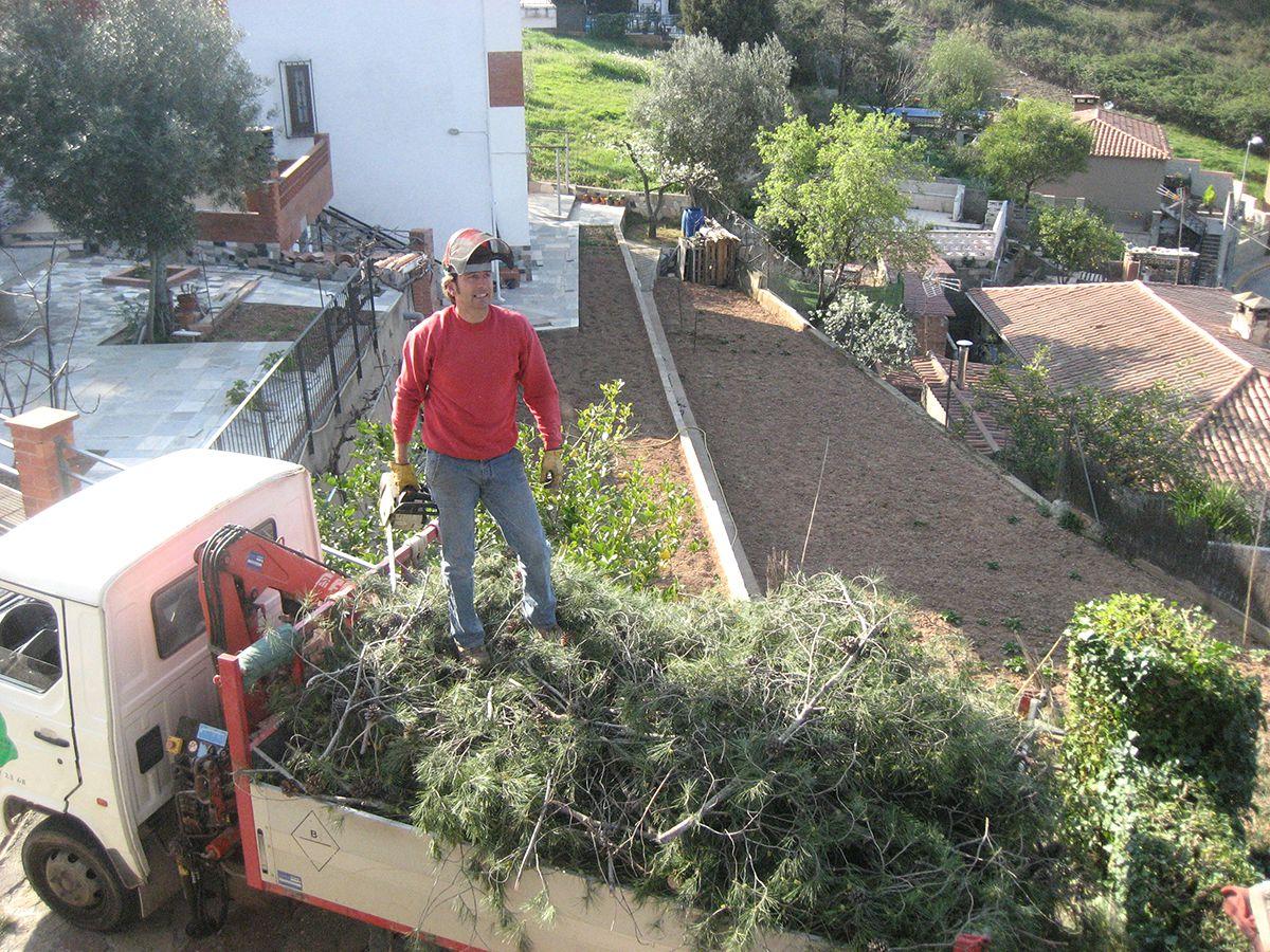 Podas y tratamientoshacemos todo tipo de podas de rboles - Arbustos para vallas ...